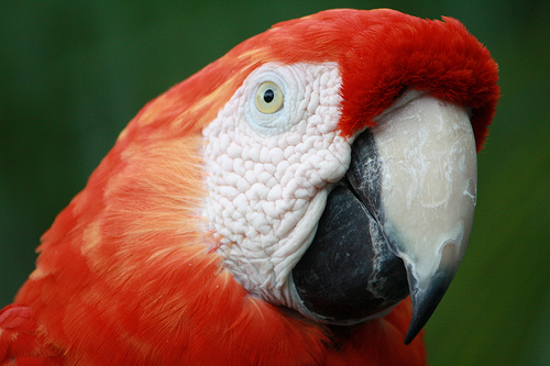 parrot by rotorod creative commons license