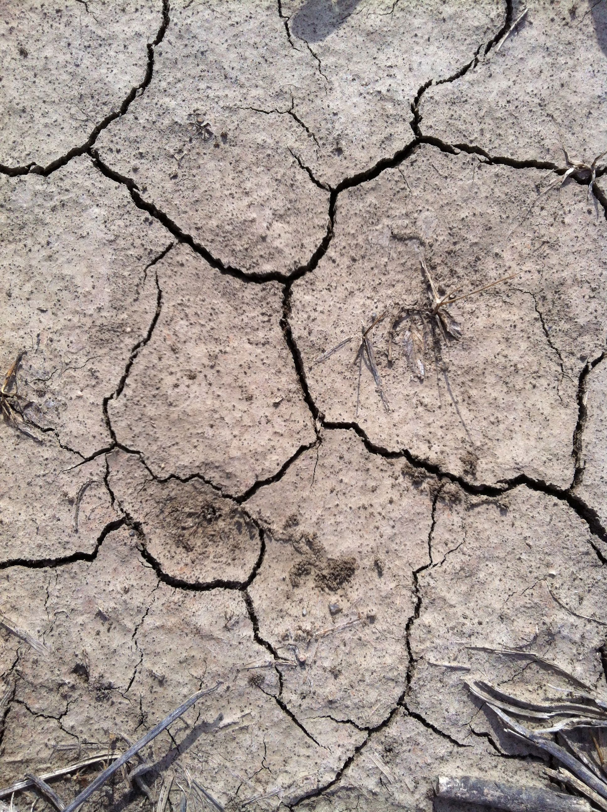 very dry to dry