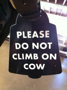 please do not climb on cow