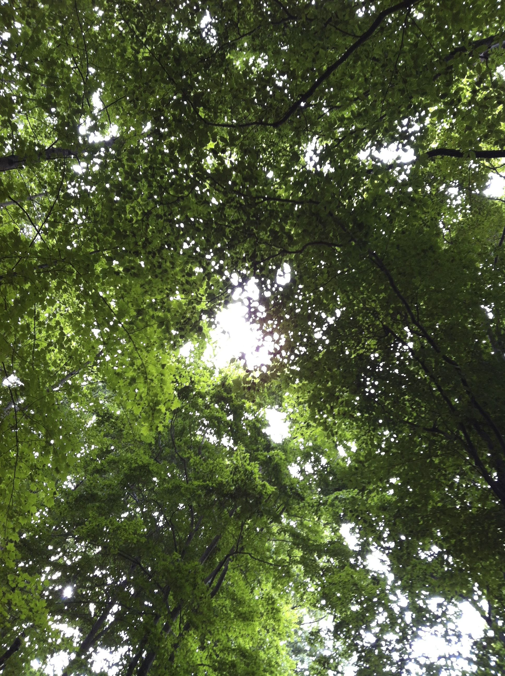 tree canopy & tree canopy | everyday epistle by Aimee Whetstine